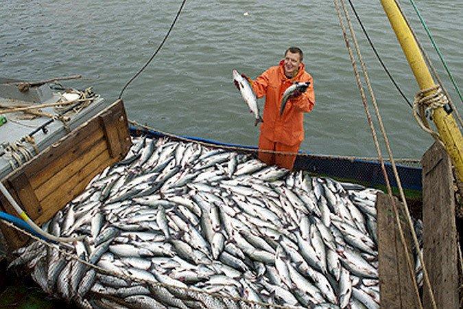 история рыбной ловли в мире